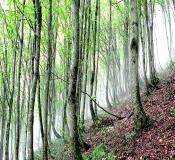 تور جنگل ابر |اطلاعات|